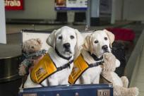 Có được mang vật nuôi lên máy bay không? Cần chú ý điều gì?