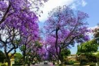 Đà Lạt – thành phố ngàn hoa