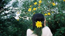 Đằm chìm vào mùa hoa Đà Lạt cuối năm