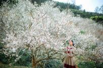 Du lịch Mộc Châu có những lễ hội nào?