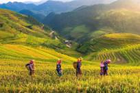 Gợi ý lịch trình du lịch Yên Bái 2 ngày 1 đêm