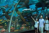 Hành trình khám phá Sea Aquarium Singapore