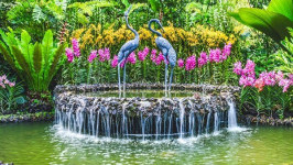 Hòa cùng thiên nhiên tại vườn Botanic Garden ở Singapore