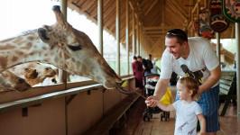 Hướng dẫn khám phá Safari World - Vườn thú mở nổi tiếng Thái Lan