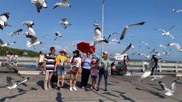 Kinh nghiệm du lịch vườn chim Hải Âu - Thái Lan