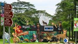 Kinh nghiệm khám phá Night Safari Singapore - Vườn thú đêm đầu tiên thế giới