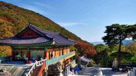 Kinh nghiệm săn vé máy bay đi Busan giá rẻ