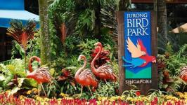 Kinh nghiệm tham quan vườn chim Jurong từ A-Z