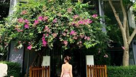 [Mới nhất] Kinh nghiệm đi Flamingo Đại Lải Resort siêu chi tiết