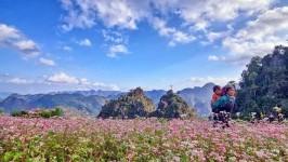 Những điều nhất định cần biết về lễ hội hoa Tam Giác Mạch