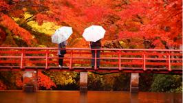 Tại sao nên đi du lịch Nhật Bản vào mùa thu?