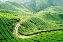 Vẻ đẹp của thảo nguyên xanh Mộc Châu
