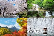Thời gian nào thích hợp để đi Hàn Quốc?