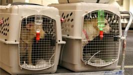 Tôi muốn mang vật nuôi lên máy bay được không?