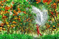 Top 10 vườn trái cây Cần Thơ được yêu thích nhất