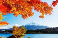 Top 5 điểm check-in đẹp nhất mùa thu Nhật Bản