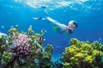 Tour lặn ngắm san hô ở Phú Quốc giá bao nhiêu?