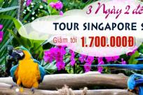 Tour Singapore tiết kiệm dành cho người bận rộn
