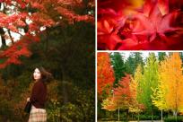 (Vnexpress.net) Thưởng ngoạn cảnh đẹp Hàn Quốc, Nhật Bản dịp thu sang