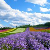 Sống ảo tại Đà Lạt mùa hoa cuối năm