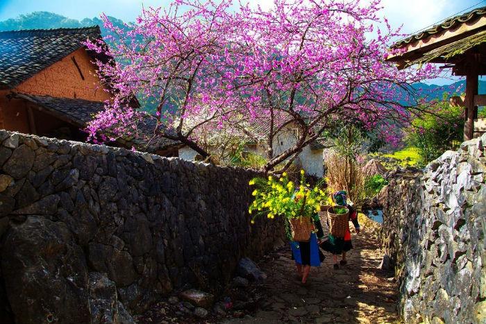 SaPa mùa hoa đào