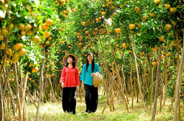 Hoa quả tươi ngon tại các miệt vườn