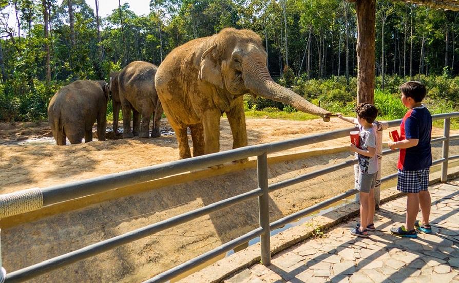 Các bạn nhỏ đang cho động vật ăn tại Vinpearl Safari Phú Quốc