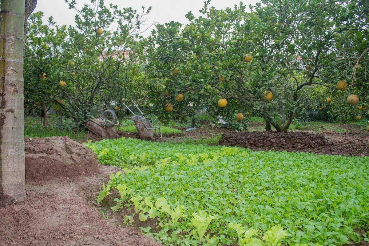 Góc trồng rau và cây ăn quả của trung tâm