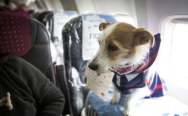 Có được mang vật nuôi lên máy bay không?