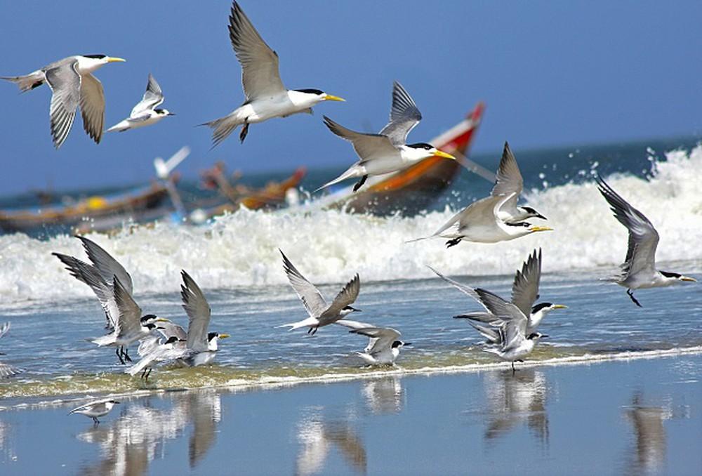 Chim hải âu bên bờ biển
