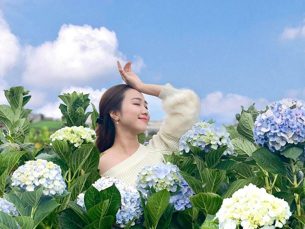 Du lịch Đà Lạt đón mùa hoa cẩm tú cầu