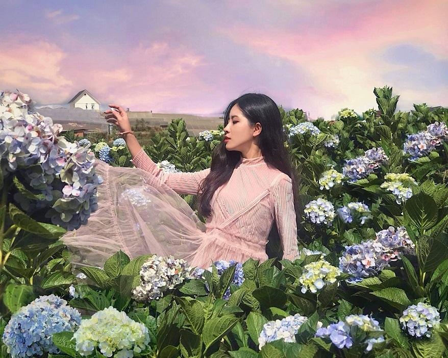 Mùa hoa cẩm tú cầu Đà Lạt