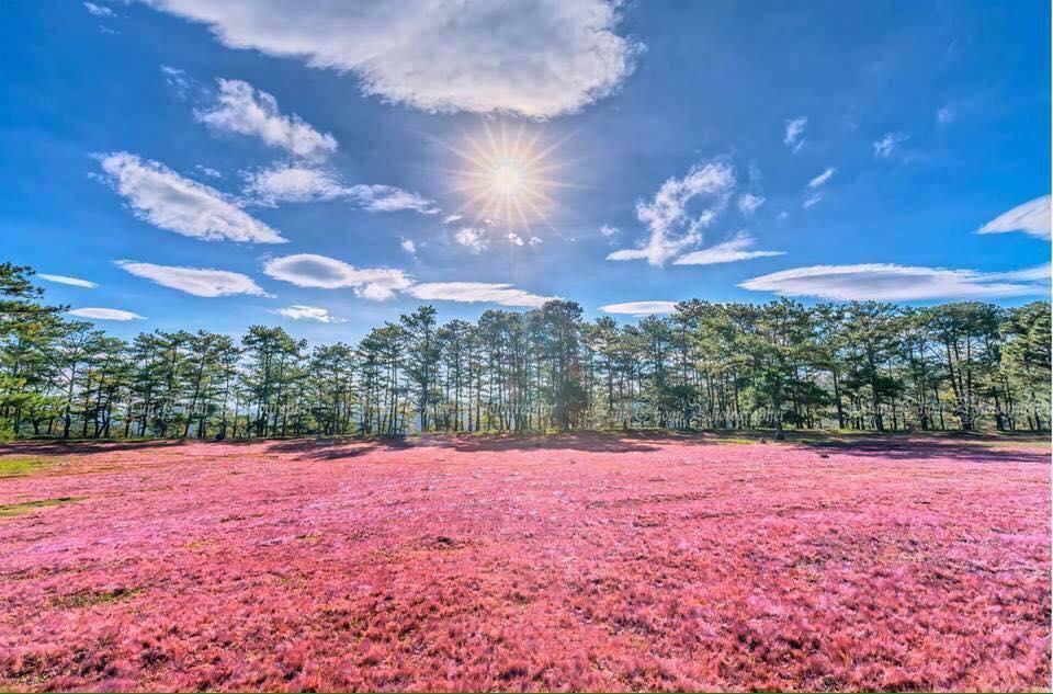 Du lịch Đà Lạt đón mùa cỏ hồng