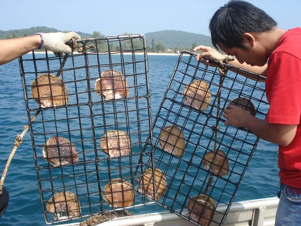 Khu nuôi cấy ngọc trai Phú Quốc