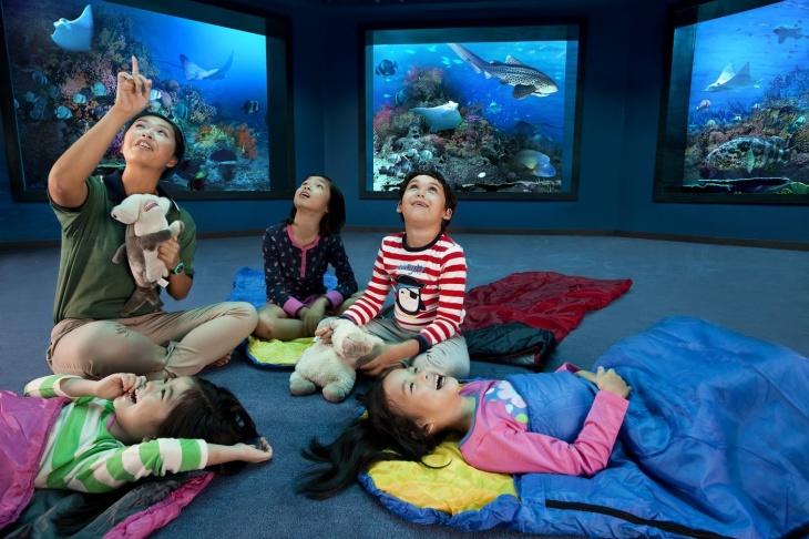 Dịch vụ Ocean Dreams dành cho gia đình