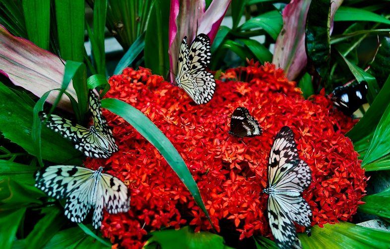 Công viên bướm và vương quốc côn trùng.