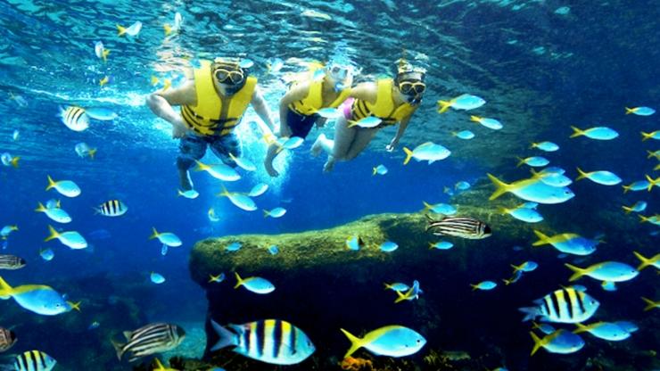 Trải nghiệm bơi lặn ở bể cá.