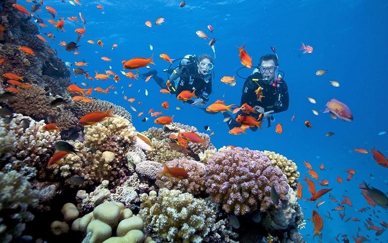 Lặn ngắm san hô tại Sun World hòn Thơm Nature Park