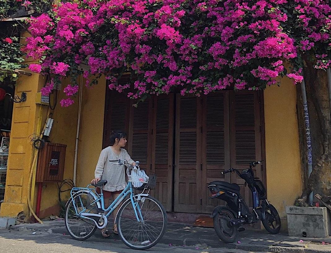 Hoa giấy tuyệt đẹp trên đường phố Hội An