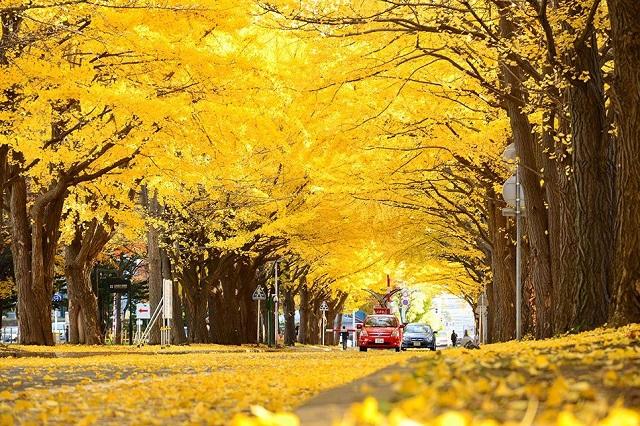 Mùa thu tháng 11 ở Hàn Quốc