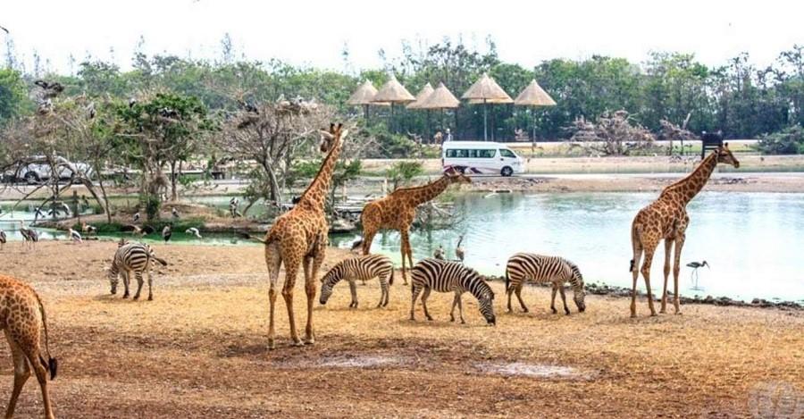 Safari World là một trong những điểm du lịch hấp dẫn bậc nhất tại xứ chùa vàng