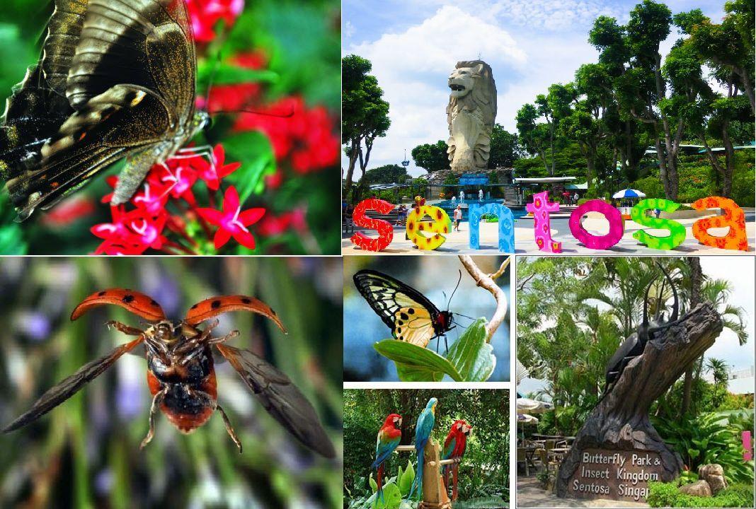 Công viên Bướm và Vương quốc Côn trùng nằm trên đảo Sentosa
