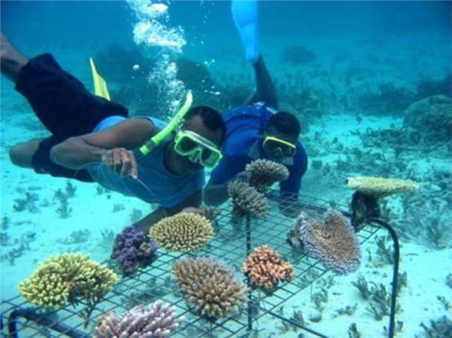 ăn ngắm biển san hô