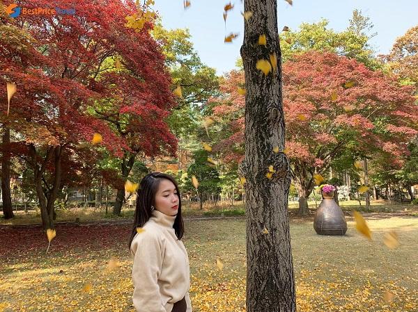 Du lịch Hàn Quốc vào mùa thu là mùa đẹp nhất