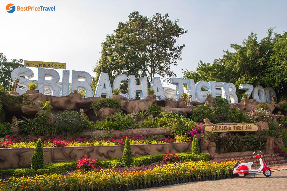 Trại hổ Sriracha Tiger Zoo