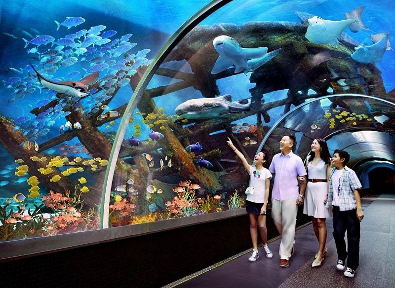 Thiên đường của hơn 3.000 sinh vật biển tại Vinpearl Land Nha Trang