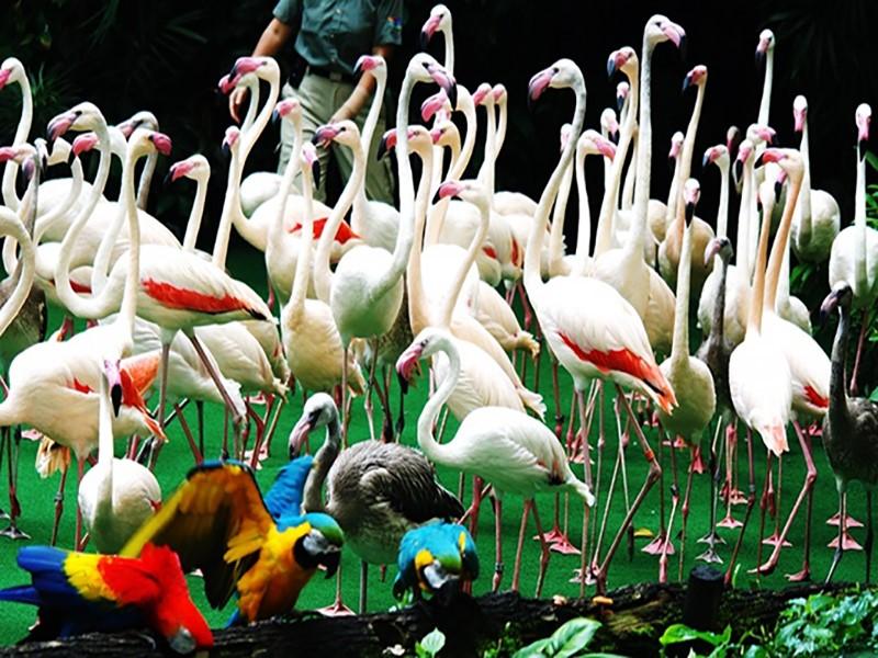 Vườn chim Jurong chứa hơn 30.000 loài chim quý hiếm