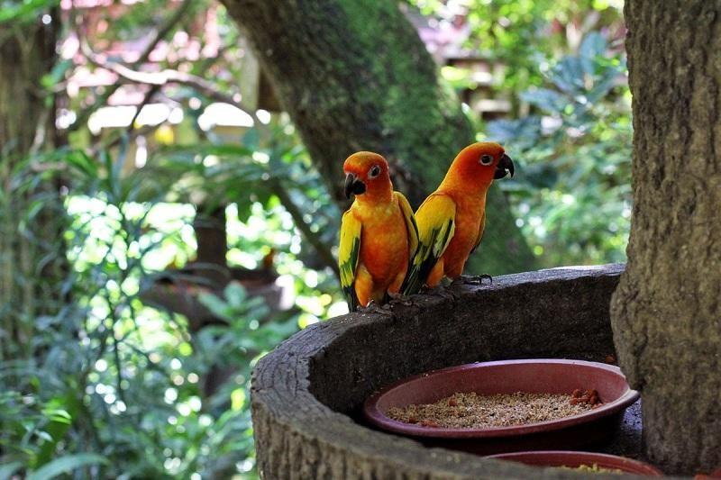 Phòng ấp trứng nuôi chim nhỏ và phòng chữa bệnh