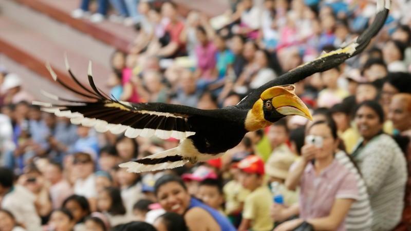 Màn biểu diễn của các loài chim tại Jurong sẽ khiến bạn phải trầm trồ cho mà xem