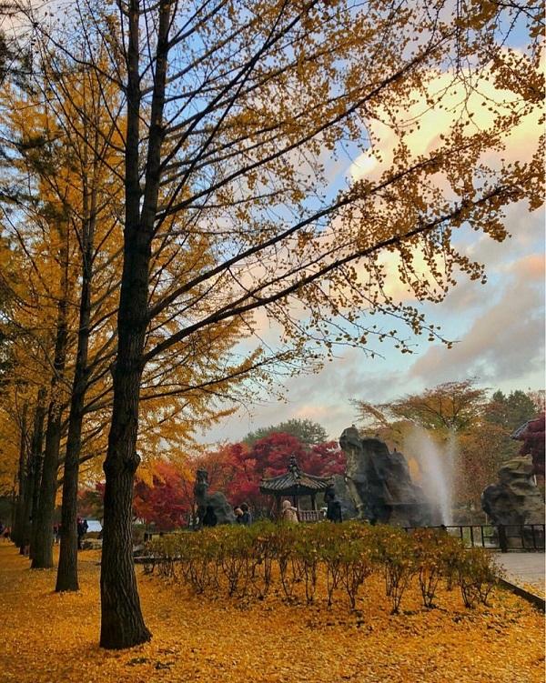 Cảnh tượng mùa thu tuyệt vời tại Công viên Yeoudio